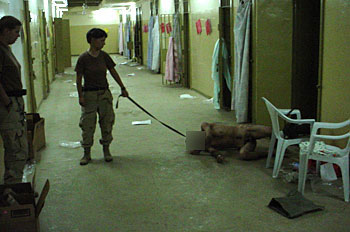 Photo showing prisoner abuse in Abu Ghraib prison, Iraq.